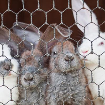 Housing your rabbit