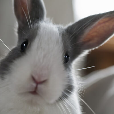Pet insurance for your rabbit
