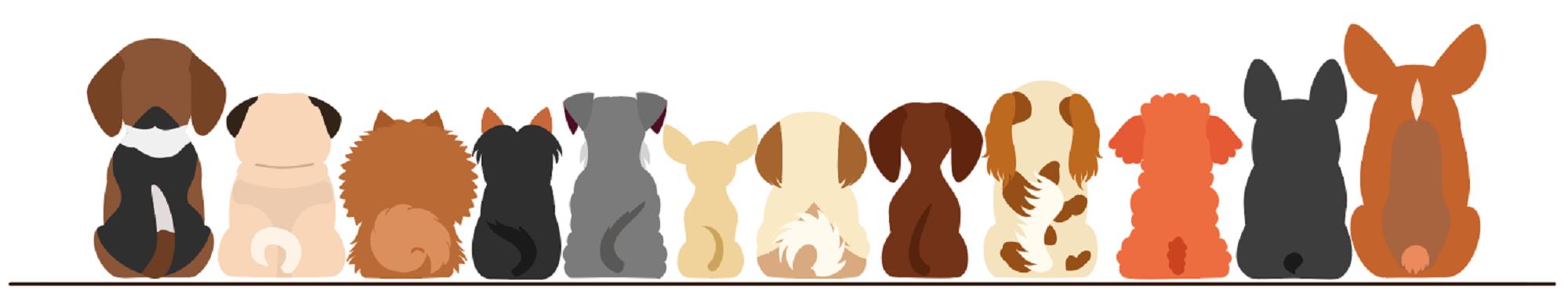 Parvovirus Disease In Your Dog